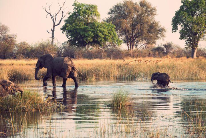 Tsowa Safari Island Offers Safari Glamping Alongside African Wildlife